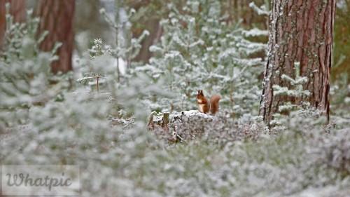 ScotlandSquirrel_EN-US9009066153_1920x1080.jpg